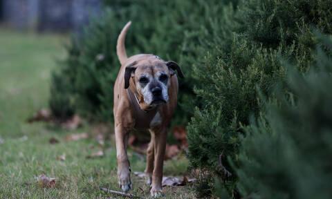 Κιλκίς: Καταγγελίες για επιθέσεις σκύλων έξω από το νοσοκομείο - «Η κατάσταση είναι εκτός ελέγχου»