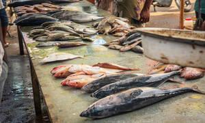 9 είδη ψαριών που δεν πρέπει να καταναλώνετε (video)