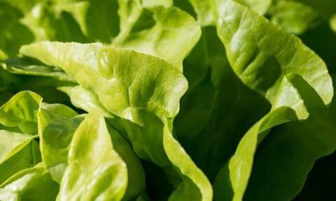 Φρίκη: Δείτε τι βρήκε μέσα στη σαλάτα του (pics)