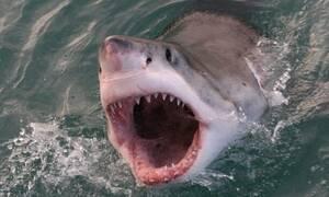 Αυτός είναι ο πιο λυσσασμένος καρχαρίας όλων των εποχών!