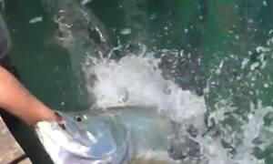 Προσπάθησε να ταΐσει ψάρι! Δευτερόλεπτα μετά άρχισε να ουρλιάζει... (Video)