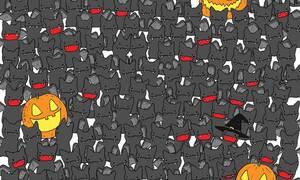 Κάπου είναι κρυμμένη μία γάτα - Μπορείτε να την βρείτε; (pics)