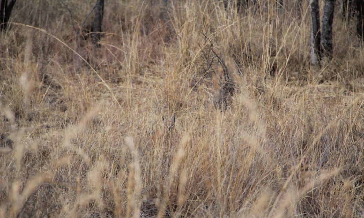 Η απόλυτη κάλυψη! Μπορείτε να βρείτε τα ζώα που γίνονται… αόρατα; (pics)