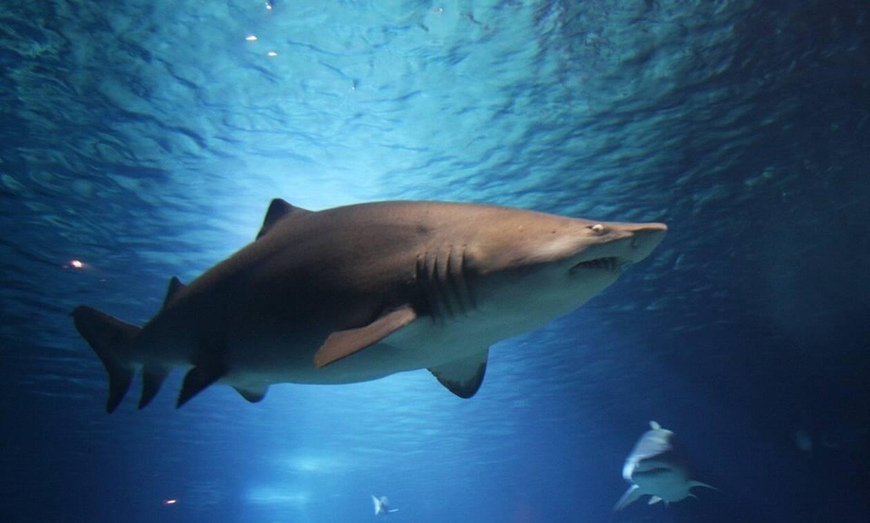 Φρίκη: Καρχαρίας κατασπάραξε γυναίκα μπροστά στα μάτια του 6χρονου γιου της