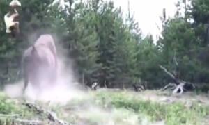 Η σοκαριστική στιγμή που βίσονας πετάει 9χρονο κοριτσάκι στον αέρα! (vid)