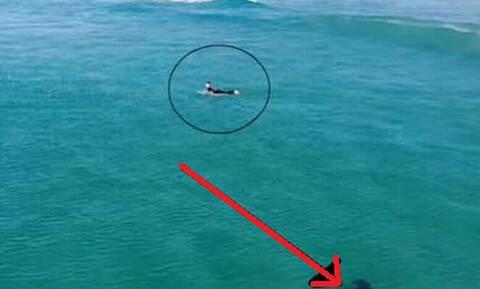 Τρομακτικό: Κολυμπούσε και δεν πήρε χαμπάρι τον κίνδυνο (vid)