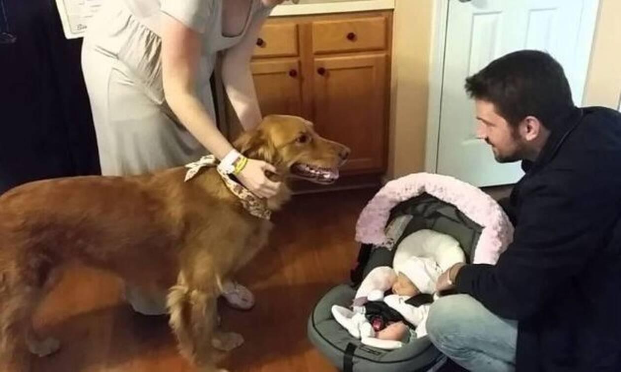 Σκύλος υποδέχεται το νεογέννητο στο σπίτι: Η αντίδρασή του θα σε... γονατίσει!