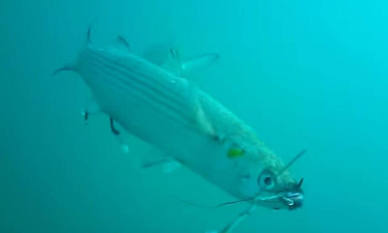 Ψάρεμα: Δόλωσε ζωντανό κέφαλο και τον έριξε στο βυθό! Δείτε τι θα τον καταπιεί