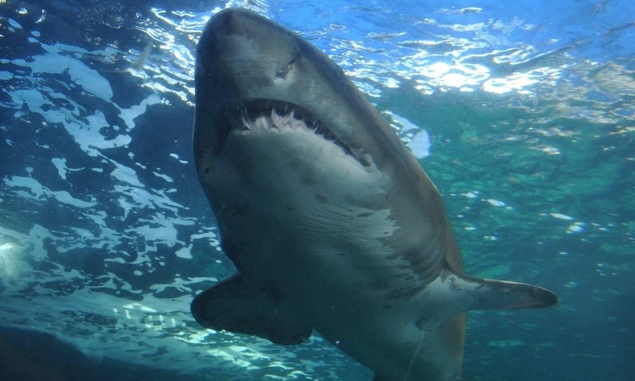 Τρόμος στην Αυστραλία: Καρχαρίας κατασπάραξε κολυμβητές (vid)