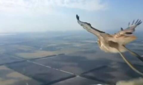 Βίντεο: Η στιγμή που ένα πουλί συγκρούεται με αεροπλάνο