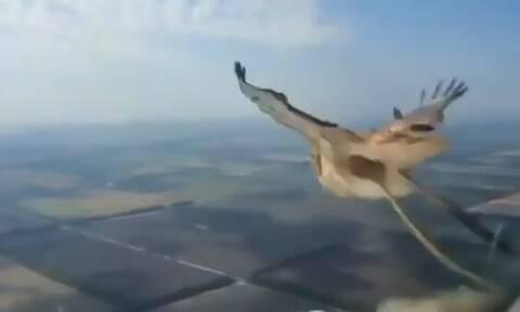 Απίστευτο: Πουλί πέφτει πάνω σε αεροπλάνο και εξαϋλώνεται! (Προσοχή: Σκληρές εικόνες)