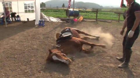 Άλογο γεννημένο… κωμικός: Δείτε τι κάνει επειδή δεν θέλει να τον ιππεύουν