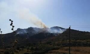 Χανιά: Υπό μερικό έλεγχο η φωτιά στα Παπαδιανά