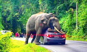 Δείτε έναν ελέφαντα να παίζει με ένα αυτοκίνητο και να το καταστρέφει