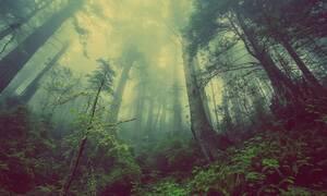 Εικόνες φρίκης: Κάμερες κατέγραψαν απόκοσμο πλάσμα σε δάσος να σκοτώνει ζώα