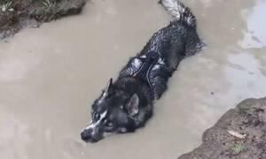Αυτό δεν είναι σκύλος, είναι… κροκόδειλος! (vid)
