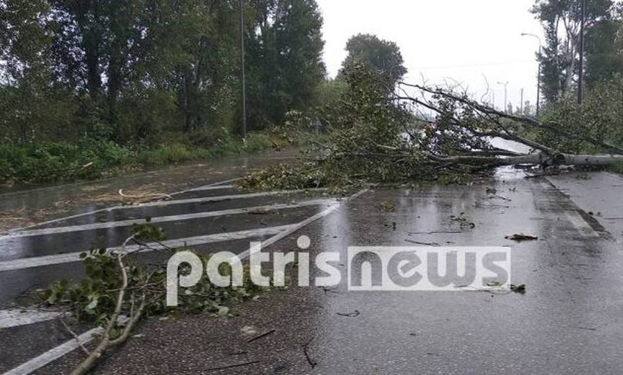 Καιρός: Κλειστή η εθνική οδός Πατρών - Πύργου από πτώση δέντρων