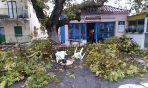 Μεσσηνία: Μεγάλες καταστροφές από ανεμοστρόβιλο