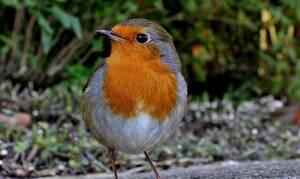 Άφωνοι οι επιστήμονες: Δείτε τι έκανε το πουλί που ξεπέρασε ακόμα και τα αεροπλάνα