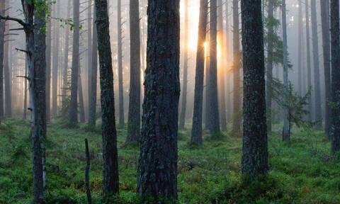Πήγε στο δάσος και τρόμαξε με αυτό που αντίκρισε!