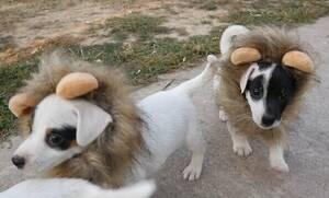 Τα σκυλάκια που «έριξαν» το ίντερνετ θα σου φτιάξουν τη μέρα! (vid)
