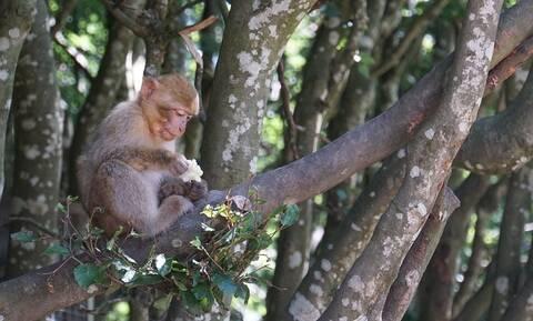 Ανείπωτη τραγωδία: Νεκρό βρέφος 4 μηνών από... μαϊμού