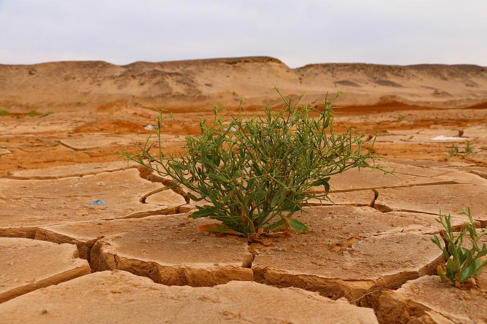 desert-4376898_960_720.jpg