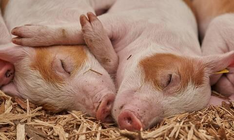 «Ζεστό» χρήμα για τους κτηνοτρόφους