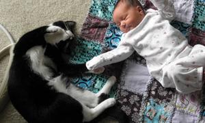 Βίντεο: Γατούλα δείχνει ΤΡΕΛΗ αγάπη σε νεογέννητο