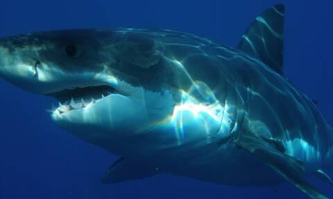 Σκότωσαν καρχαρία που ήταν απειλή - «Πάγωσαν» μ' αυτό που βρήκαν στο στομάχι του (pics)