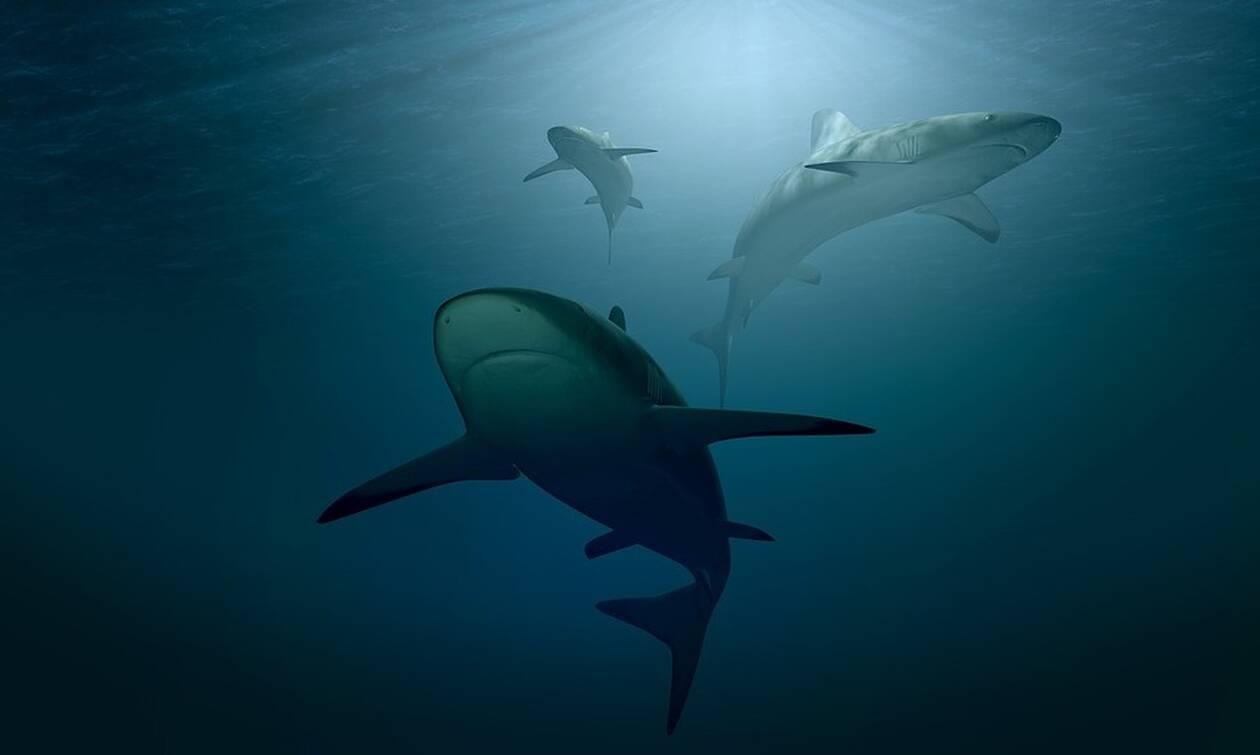 Φρίκη: Δεν φαντάζεστε τι βρήκαν στο στομάχι καρχαρία (pics)