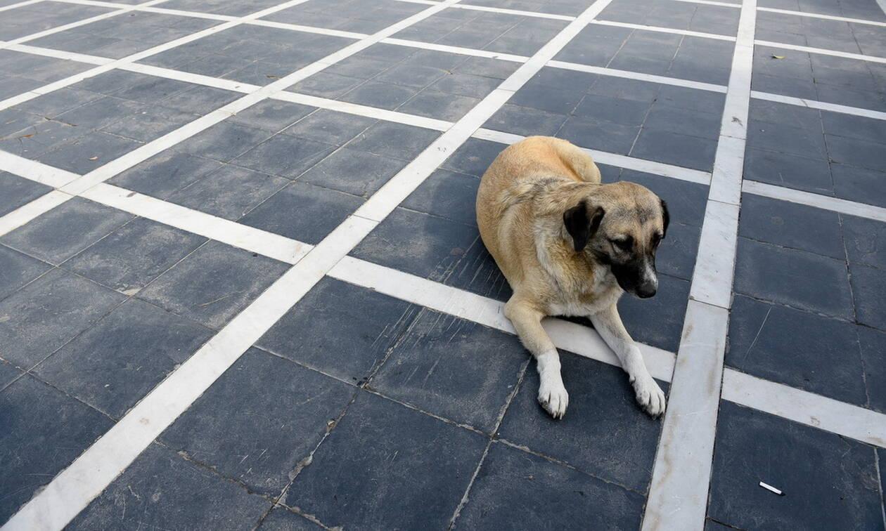 Πειραιάς: Συνελήφθη άνδρας για κακοποίηση ζώου – Είχε δέσει σκύλο σε τροχό αυτοκινήτου