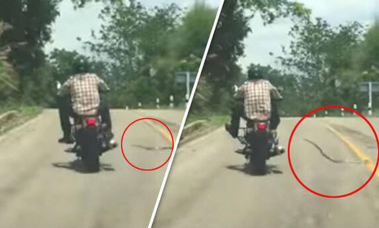 Φίδι κάνει «ντου» σε ανυποψίαστο μοτοσικλετιστή! (vid)