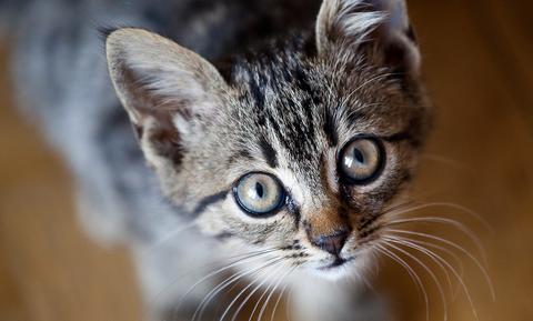 Έχεις γάτα; Αυτά είναι τα καλύτερα ονόματα που μπορείς να της δώσεις