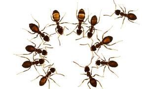 Έχεις έντομα στο σπίτι; Δες πώς θα τα εξαφανίσεις!