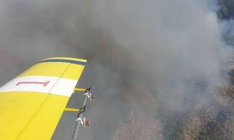Κύπρος: Καίγεται το δάσος Ακάμα