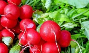 Βιολογικές καλλιέργειες: Αυξήθηκε το ποσό επιχορήγησης  - Πότε θα καταβληθεί στους δικαιούχους