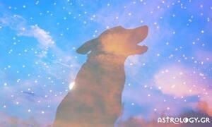 Οι 4 «μοναχικοί λύκοι» του ζωδιακού!