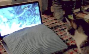 Γάτα κοιτάζει την οθόνη και… σαλτάρει! | ΒΙΝΤΕΟ