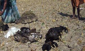 Μυστήριο στην Ινδία: Χιλιάδες πουλιά βρέθηκαν νεκρά σε λίμνη και κανείς δεν ξέρει τον λόγο