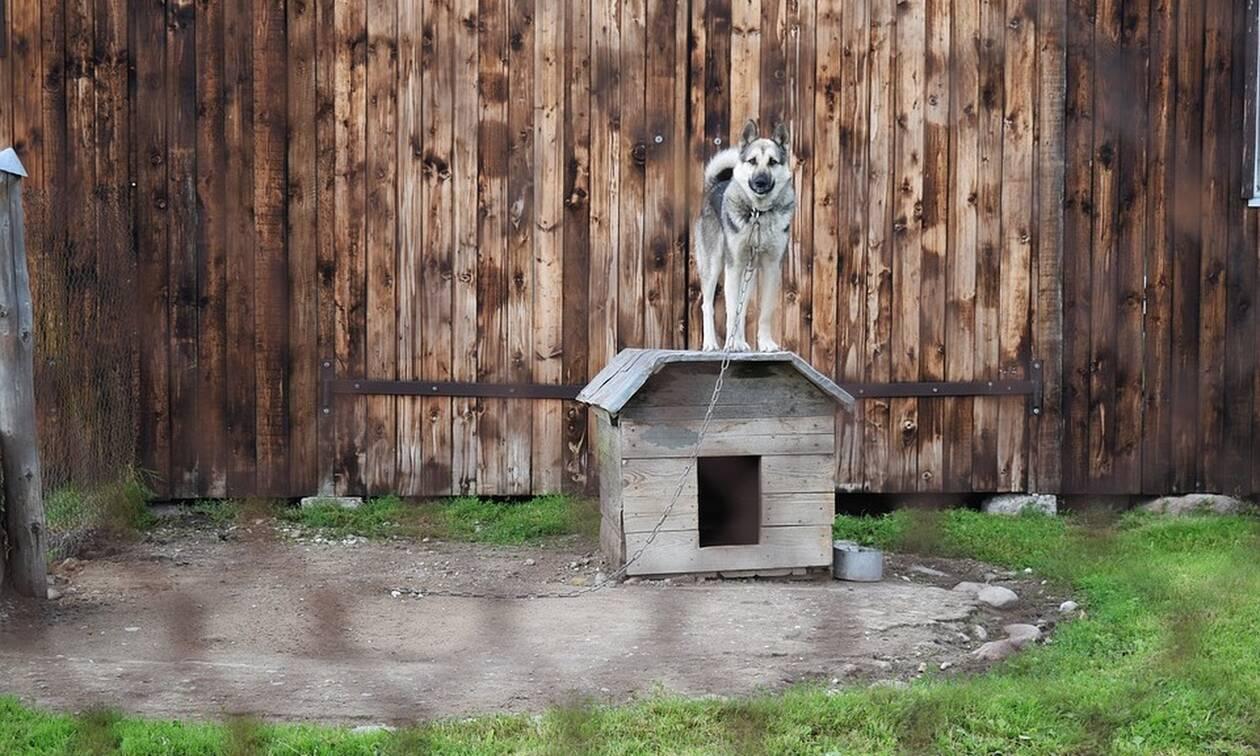 Απίστευτο: Γεννήθηκε σκυλί με ουρά στο... κεφάλι (pics)