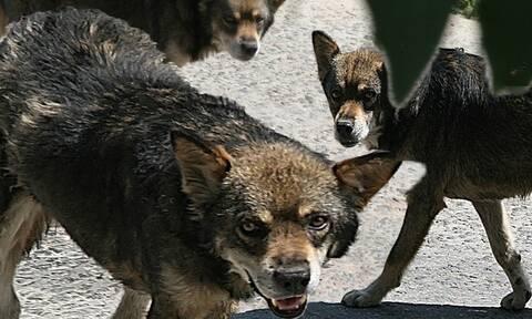 В городе Серрес собаки напали на 9-летнего школьника