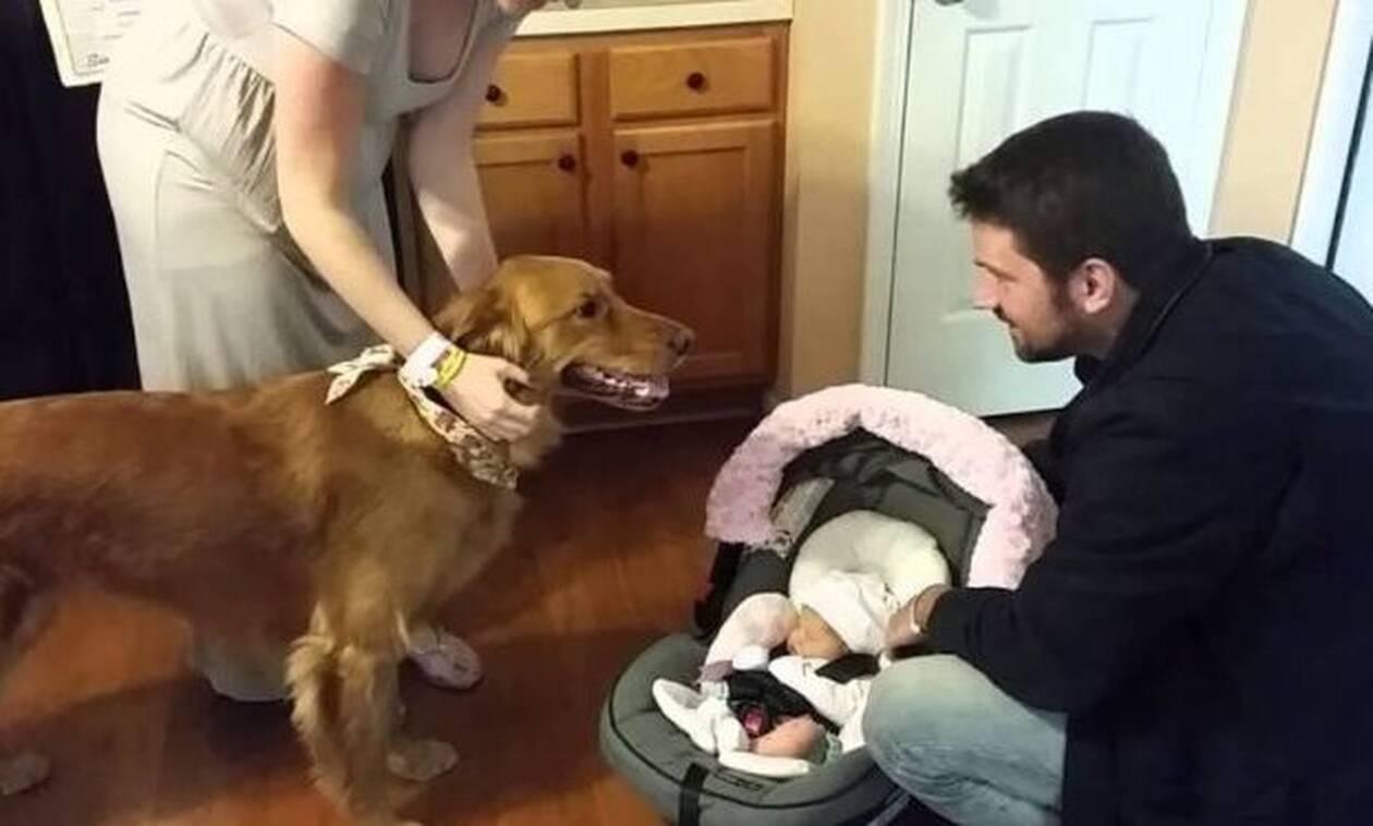 Βίντεο: Σκύλος υποδέχεται το νεογέννητο στο σπίτι και η αντίδρασή του θα σε… γονατίσει!