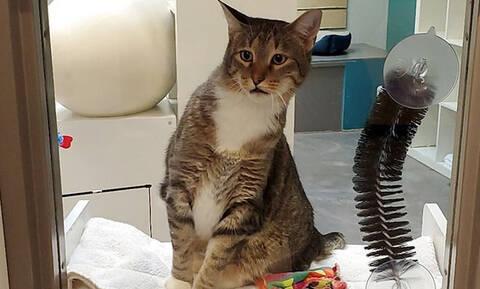 Αν αυτή η γάτα ήταν άνθρωπος θα ήταν φυλακή - Δες τον απίστευτο λόγο