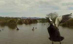 Χήνα με τρελά νεύρα ΤΣΑΚΙΖΕΙ ενοχλητικό drone! (vid)