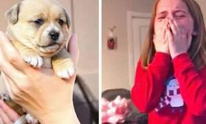 Χάρισαν στην μικρή ένα κουταβάκι και η αντίδρασή της ραγίζει καρδιές! (vid)