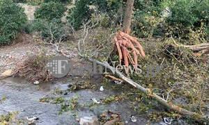Τραγωδία στα Χανιά: Έπεσε δέντρο και τον σκότωσε