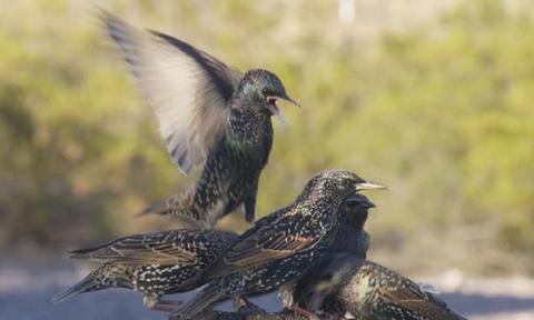 Σοκαριστική μάχη... επιβίωσης μεταξύ πτηνών για την εξασφάλιση της τροφής τους (video)