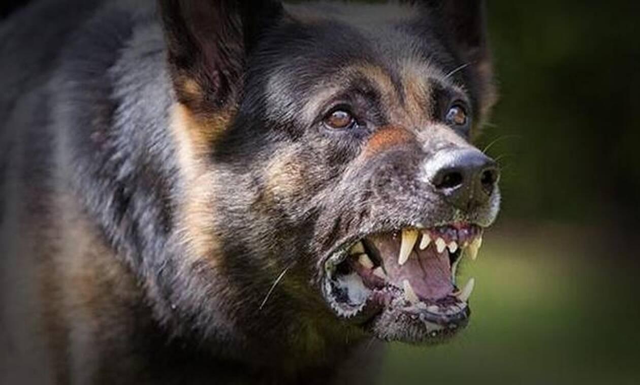 Ασύλληπτη τραγωδία: Σκυλιά κατασπάραξαν έγκυο έξι μηνών - Το τελευταίο τηλεφώνημα στον σύζυγό της