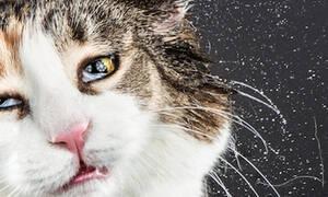 Πόσο αστείες είναι οι γάτες όταν κάνουν μπάνιο! (pics)